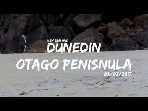 Dunedin, Otago Peninsula | Work & Travel NZ | cinematic Vlog | 2017
