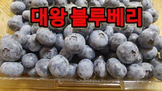 명품 고품질 점보사이즈 블루베리 재배방법,  블루베리 …