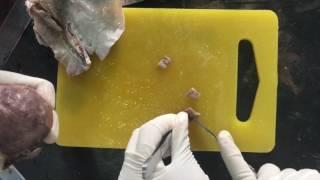 Histopathology - tissue processing