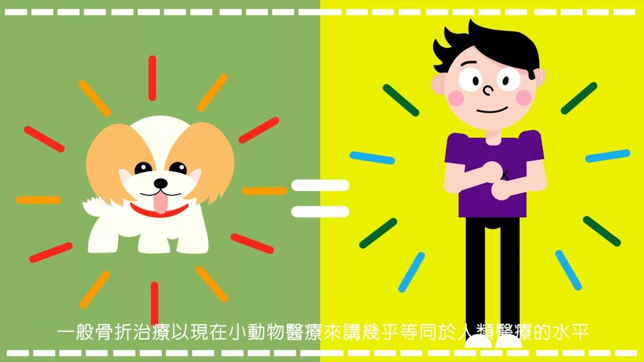 寵物骨折創傷處理篇一臺北市名人維東尼動物醫院(Famous Veterinary Hospita) - YouTube