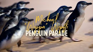 Penguin Parade Bedtime Stories with Wippa | LIVE from Aus,  Phillip Island