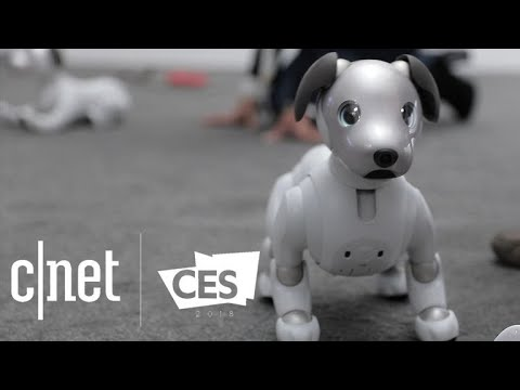 Sony's new Aibo robot dog is absolutely adorable