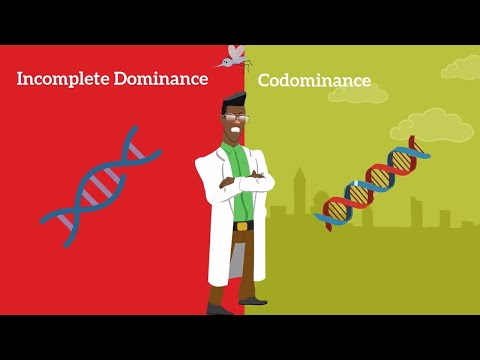 Genetics Basics Difference Between Codominance And