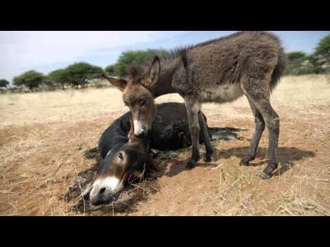 Hayvan Haklarını Yok Sayan Siyasilere Oy Yok
