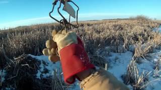Установка капканов на ондатру зимой