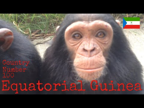 Chimpanzee encounter in Equatorial Guinea, Central Africa ❤️🇬🇶✨