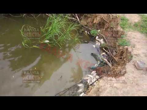 Гибель рыбы в озере в Сухиничах