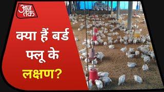 Bird Flu: Corona काल में Bird Flu का दहशत!, जानिए क्या हैं इसके लक्षण?