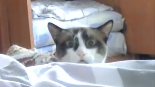 Mystified Cat Peeks Over bed!