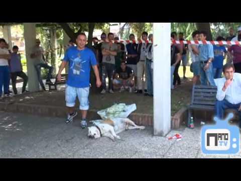 Download Guardia giurata spara ed uccide un cane in Villa Comunale