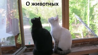 Кошки на балконе