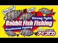 アイゴ釣り/Kourkouna Fishing/Rabbit Fish Fishing