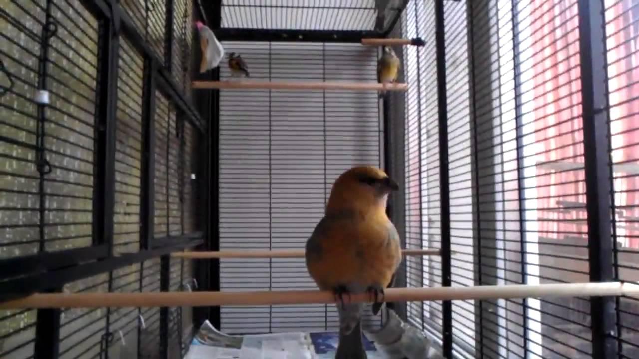 Купить клетки для птиц, вольеры в интернет-магазине зоопассаж с доставкой по москве и московской области. Огромный ассортимент и отличные цены.