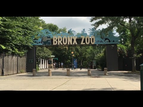 Thumbnail: NEW YORK BRONX ZOO! SEA LION FEEDING! BABY GORILLAS, GIRAFFES, TIGERS and MANY MORE! FUN FOR KIDS!
