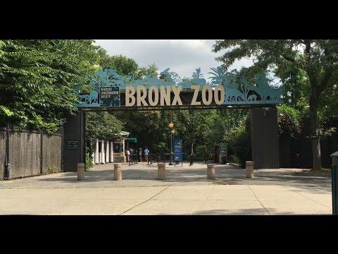 NEW YORK BRONX ZOO! SEA LION FEEDING! BABY GORILLAS, GIRAFFES, TIGERS and MANY MORE! FUN FOR KIDS!