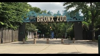 NEW YORK BRONX ZOO! SEA LION FEEDING! BABY GORILLAS, GIRAFFES, TIGERS and MANY MORE! FUN FOR KIDS!