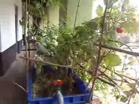 1st AQUAPONICS System @ PUTHENCRUZE @ Kerala (AQUA=WATER,PONICS=CULTURE)