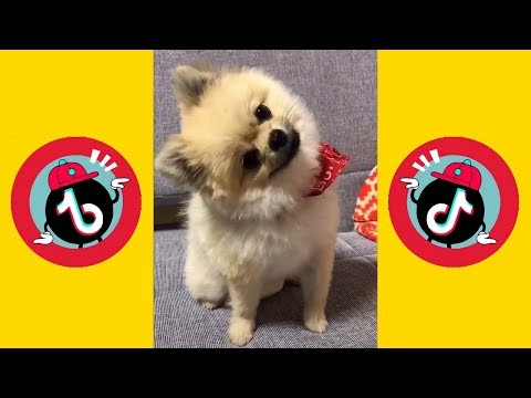 Funny Pets TikTok Shape of you Compilation -Part1