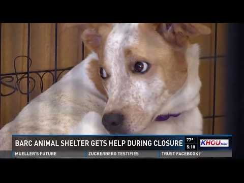BARC animal shelter gets help during closure