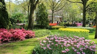 Vlog Amsterdam - Dia 2 (parte 1)   Keukenhof Park, Tulipas e mais Tulipas!