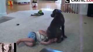 Té ghế với chú chó troll cậu chủ