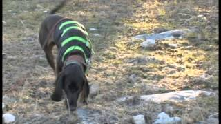 Teach Your Dog To Track & Recover Wounded Game - Now Available