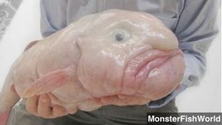 Blobfish — 10 Facts about the Kings and Queens of Ugly | Fun Facts ...