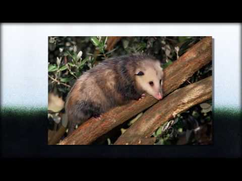 Rodent Control | Fountain  Hills, AZ -- Cummings Termite & Pest Control
