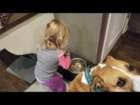 Toddler feeding dog