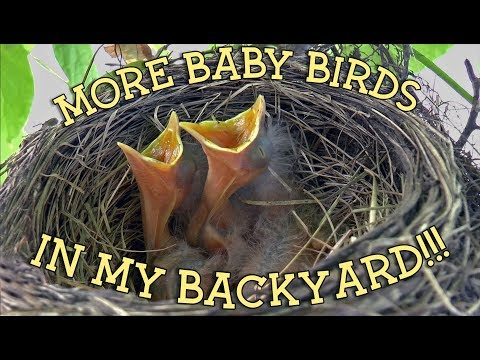 A BACKYARD FULL OF LIFE │ More baby birds in my backyard!!!