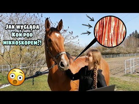 Oglądam mojego konia pod MIKROSKOPEM!!!