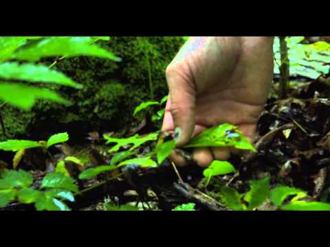 Career Connections (2015) Natural Sciences Manager - YouTube