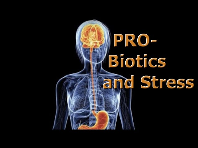 Probiotics,  Stress and IBS