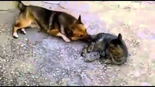 Прикольные собаки прикол кот и собака Тишка и Роза Смотри прикол!
