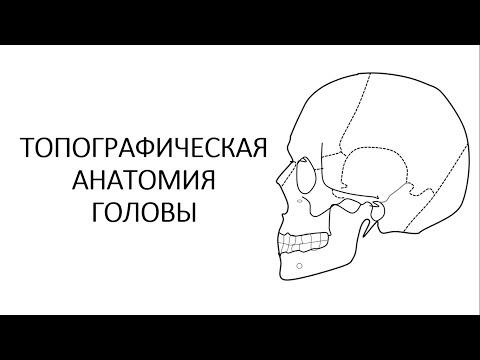 Топографическая анатомия головы. Часть 2.