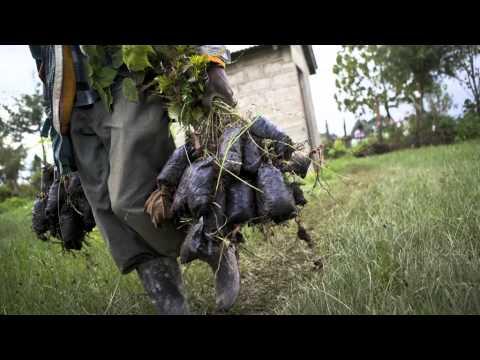 Sustainable flower industry growing in Kenya