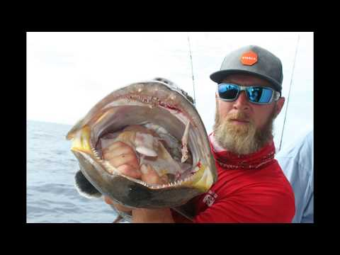 Florida Fishing Pulley Ridge 2017