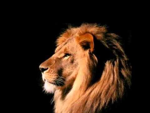 5f5fe9071 Leão de judá prevaleceu - YouTube