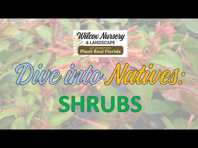 Dive into Natives: Shrubs