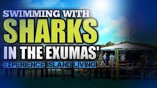 Swimming with Sharks in the Exumas' - Bahamas!