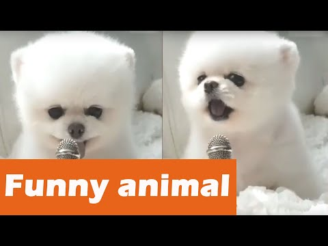Funny animals | Cat meowing into microphone| Funny cats | Kittens meowing competition