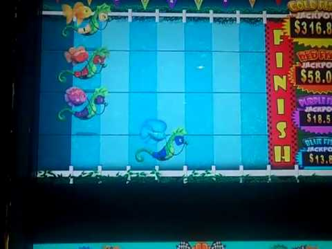 Goldfish Race For The Gold -- Progressive Slot Win!