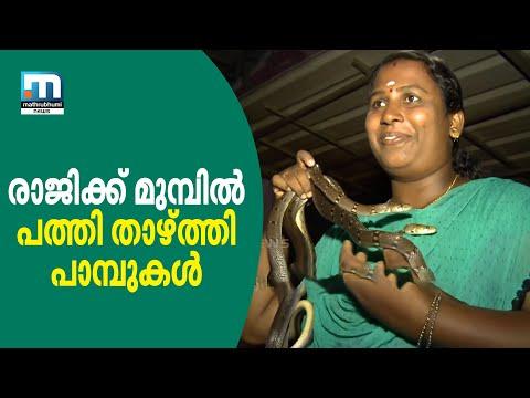 Meet Woman Snake Catcher Raji!| Mathrubhumi News