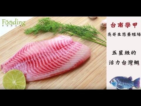 【產地嚴選】生態養殖,五星級的活力台灣鯛