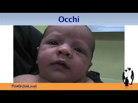 Testa-Naso-Occhi-Orecchi-Bocca - Parte 2
