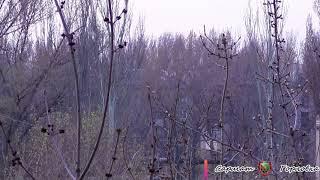 17 апреля 2018  утро в Горловке (война)