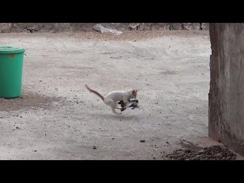 Кошка охотся на голубей