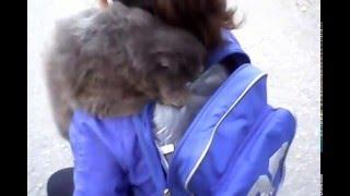 Кошка и рюкзак