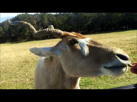 Fossil Rim Wildlife - Texas