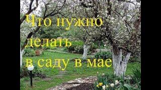 Что нужно делать в саду в мае